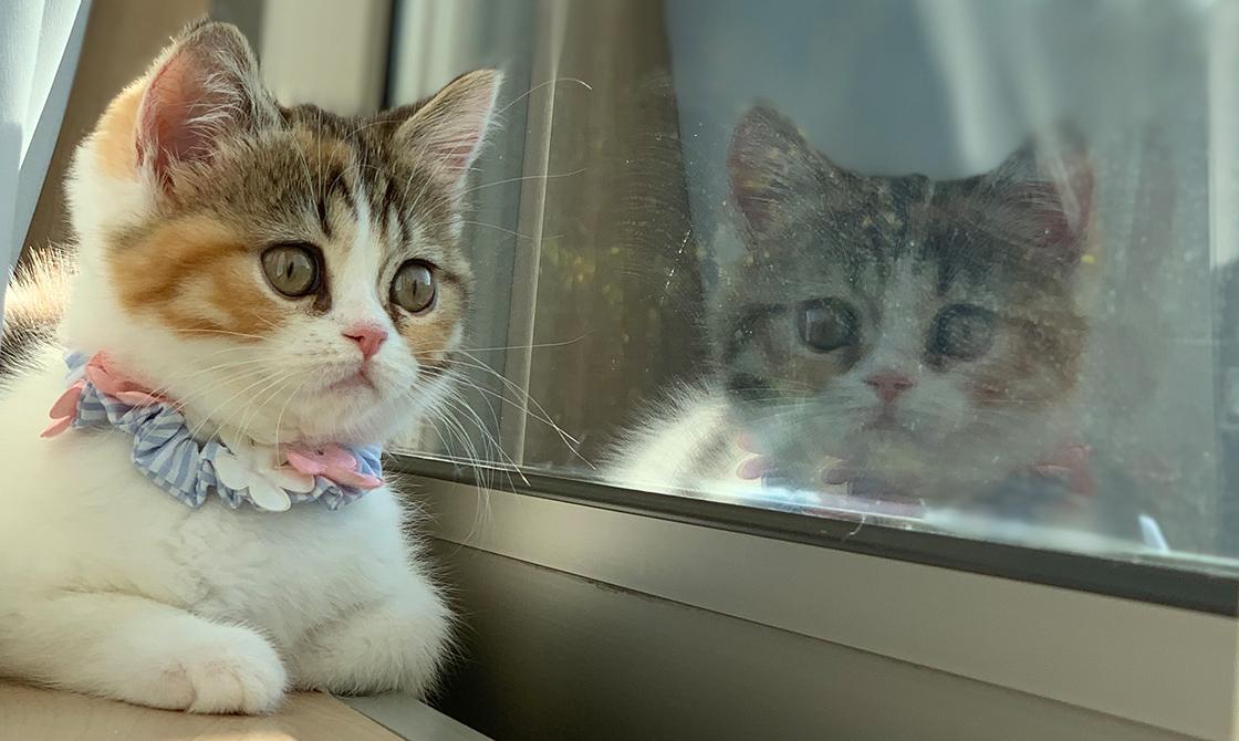 だいにゃる猫の写真展・だいにゃる ネコまつり